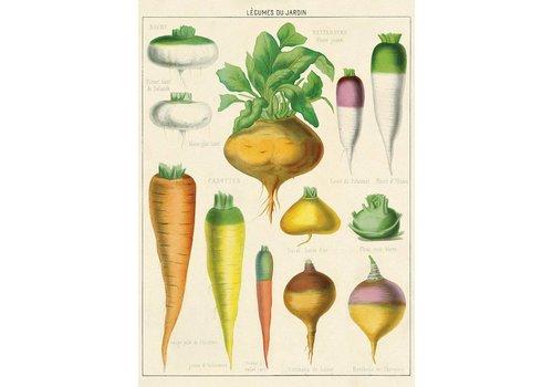 Cavallini Papers & Co Cavallini - Legumes du Jardin - Wrap/Paper