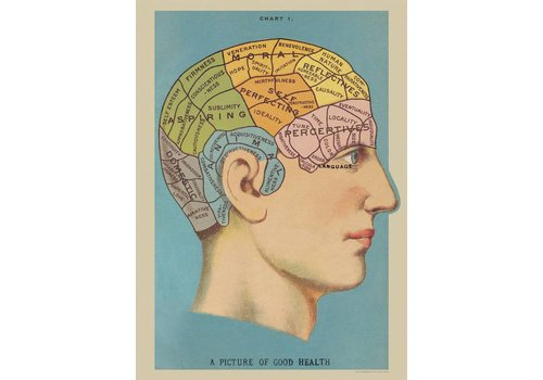 Cavallini Papers & Co Cavallini - Phrenology - Wrap/Poster