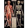 Cavallini Papers & Co Cavallini - Anatomy - Wrap/Poster