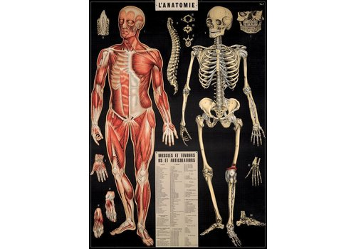 Cavallini Papers & Co Cavallini - Anatomy - Wrap/Poster