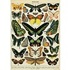 Cavallini Papers & Co Cavallini - Butterflies - Wrap/Poster