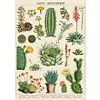 Cavallini Papers & Co Cavallini - Cacti & Succulents - Wrap/Poster