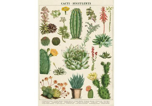 Cavallini Papers & Co Cavallini - Cacti & Succulents - Wrap/Poster