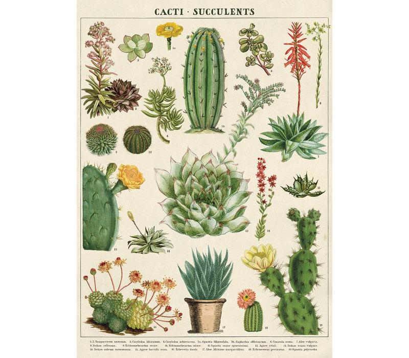 Cavallini - Cacti & Succulents - Wrap/Poster