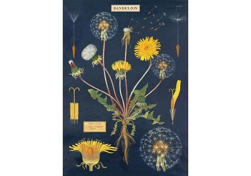 Cavallini Papers & Co Cavallini - Dandelion Chart - Wrap/Poster