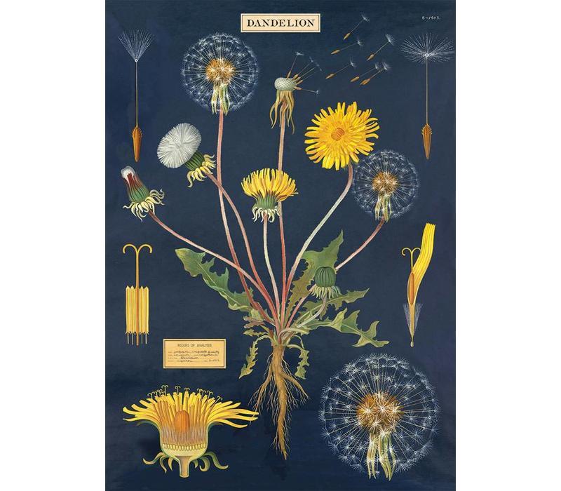 Cavallini - Dandelion Chart - Wrap/Poster