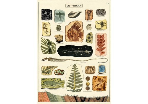 Cavallini Papers & Co Cavallini - Fossils - Wrap/Poster