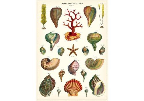 Cavallini Papers & Co Cavallini - Merveilles De La Mer - Wrap/Poster