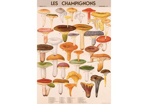 Cavallini Papers & Co Cavallini - Mushrooms - Wrap/Poster
