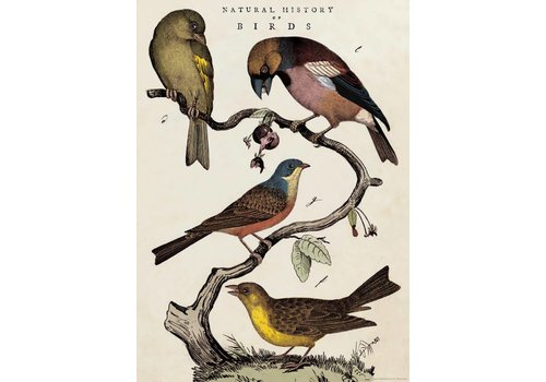 Cavallini Papers & Co Cavallini - Natural History Birds - Wrap/Poster