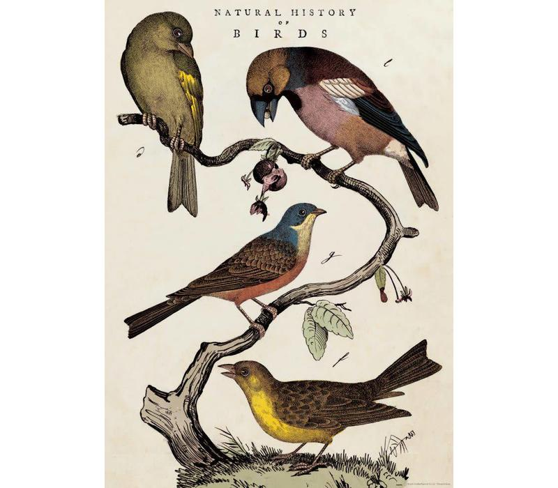 Cavallini - Natural History Birds - Wrap/Poster