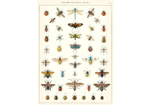 Cavallini Papers & Co Cavallini - Natural History Insects - Wrap/Poster