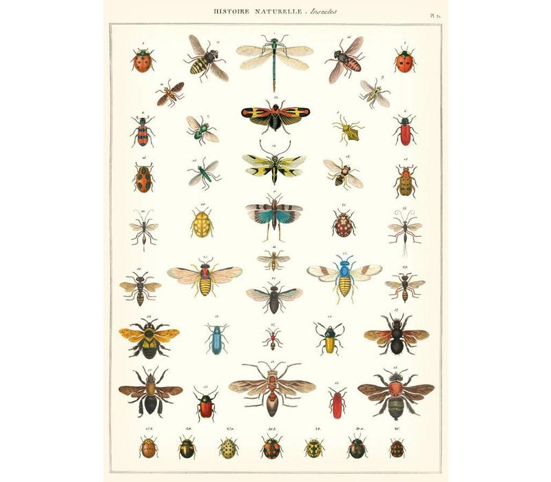 Cavallini - Natural History Insects - Wrap/Poster