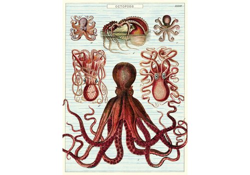 Cavallini Papers & Co Cavallini - Octopods - Wrap/Poster