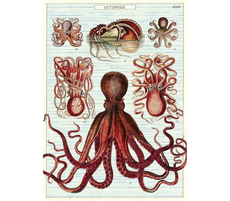 Cavallini - Octopods - Wrap/Poster