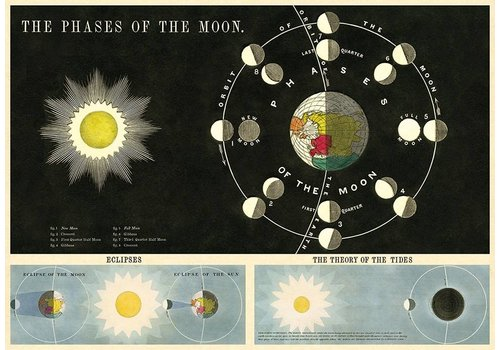 Cavallini Papers & Co Cavallini - Phases of the Moon - Wrap/Poster