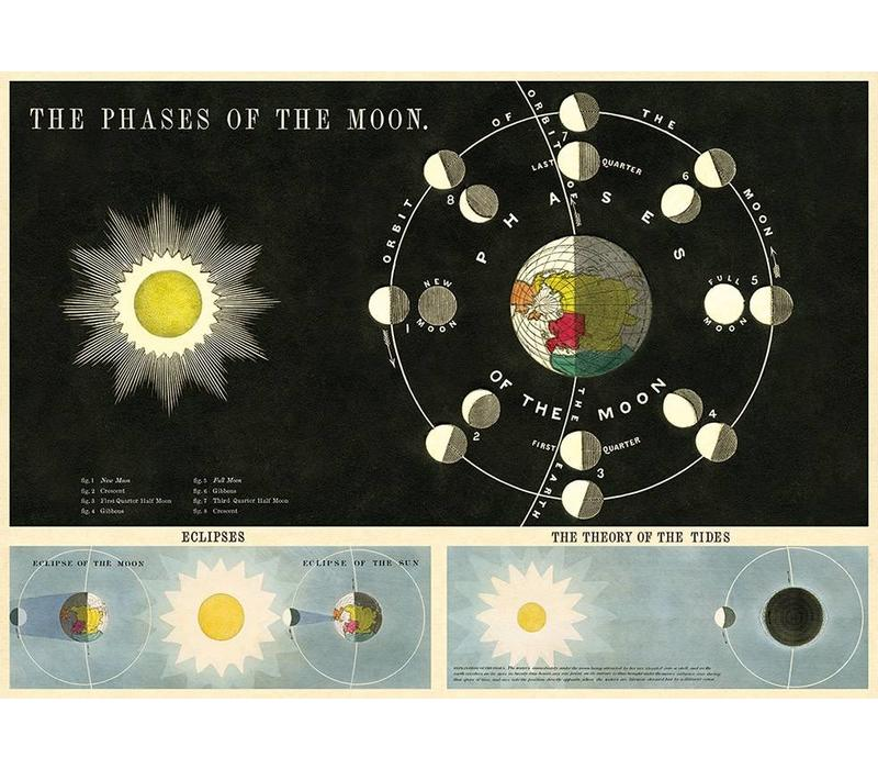 Cavallini - Phases of the Moon - Wrap/Poster