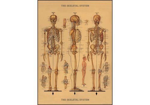 Cavallini Papers & Co Cavallini - Skeleton - Wrap/Poster
