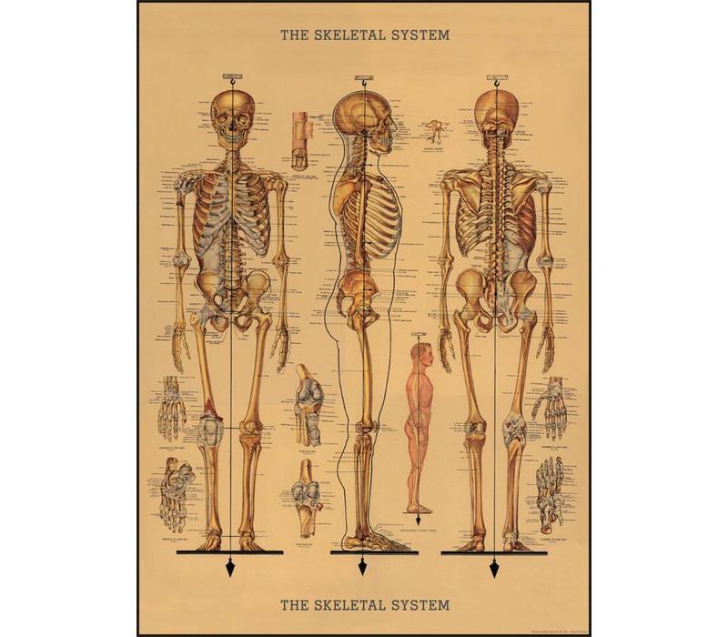 Cavallini - Skeleton - Wrap/Poster