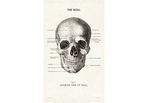 Cavallini Papers & Co Cavallini - Skull - Tea Towel