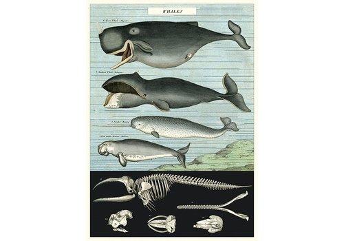 Cavallini Cavallini - Whale Chart - Wrap/Poster