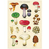 Cavallini Papers & Co Cavallini - Mushrooms 2 - Wrap/Poster