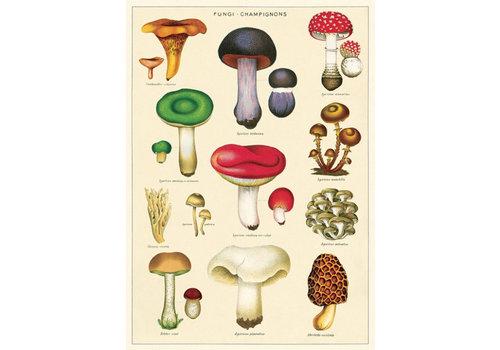 Cavallini Papers & Co Cavallini - Mushrooms 2 - Wrap/Poster