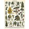 Cavallini Papers & Co Cavallini - Arboretum - Wrap/Poster