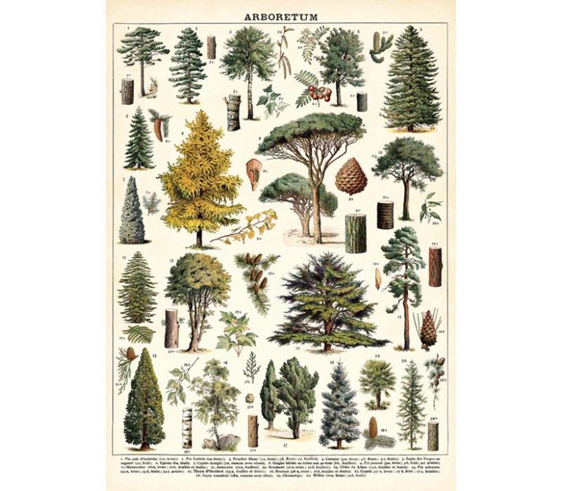 Cavallini - Arboretum - Wrap/Poster