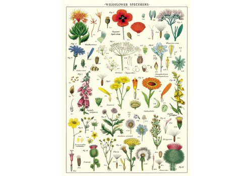Cavallini Papers & Co Cavallini - Wildflowers - Wrap