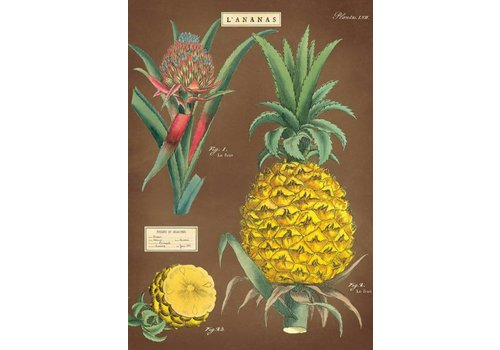 Cavallini Cavallini - Pineapple - Wrap/Poster