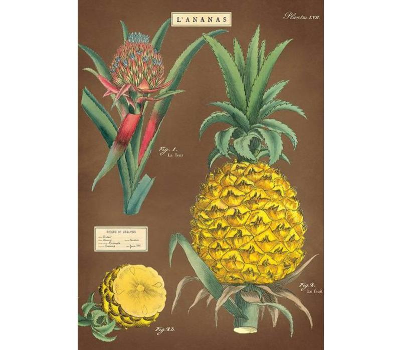 Cavallini - Pineapple - Wrap/Poster