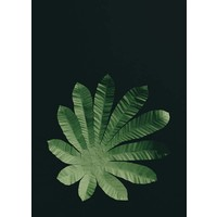 Little Ray of Sunflower - Cecropia Leaf - Print