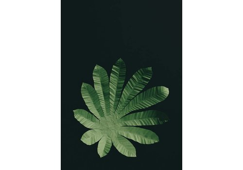 Little Ray of Sunflower Little Ray of Sunflower - Cecropia Leaf - Print