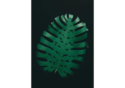 Little Ray of Sunflower Little Ray of Sunflower - Monstera Leaf - Print