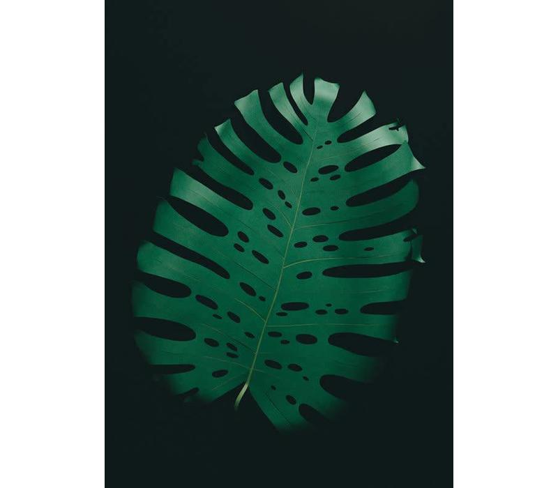 Little Ray of Sunflower - Monstera Leaf - Print
