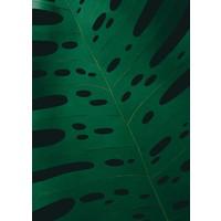 Little Ray of Sunflower - Monstera Leaf 2 - Print