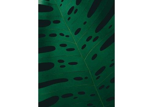 Little Ray of Sunflower Little Ray of Sunflower - Monstera Leaf 2 - Print