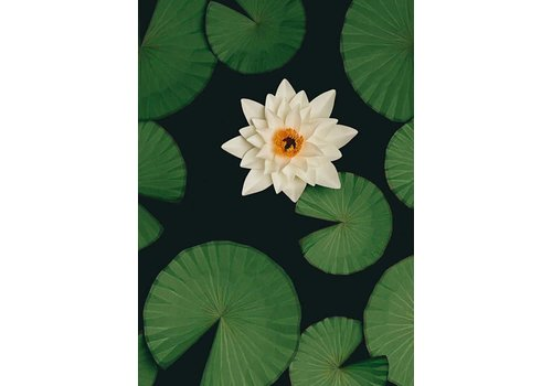Little Ray of Sunflower Little Ray of Sunflower - Lilly Pads - Print