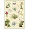 Cavallini Papers & Co Cavallini - Air Plants - Wrap/Poster