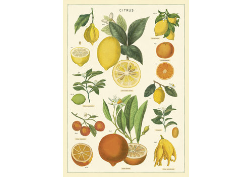 Cavallini Papers & Co Cavallini - Citrus - Wrap/Poster
