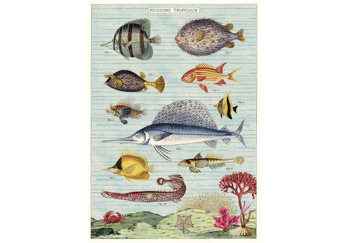 Cavallini Papers & Co Cavallini - Tropical Fish - Wrap/Poster