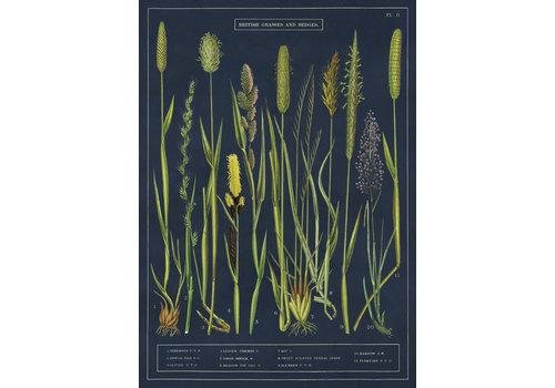 Cavallini Papers & Co Cavallini - Grasses and Sedges - Wrap/Poster