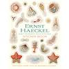 Pomegranate Pomegranate - Ernst Haeckel: Art Forms In Nature - Sticker Book