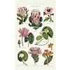 Cavallini Papers & Co Cavallini - Tropical Plants - Tea Towel