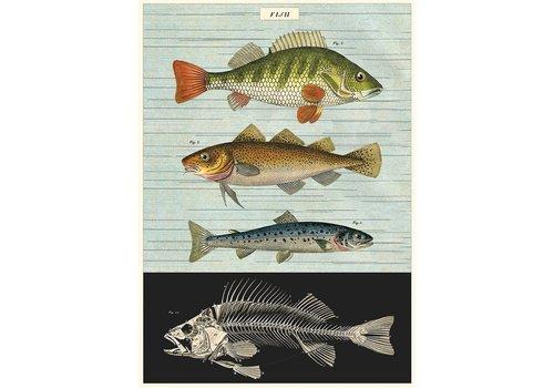 Cavallini Papers & Co Cavallini - Fish - Wrap/Poster