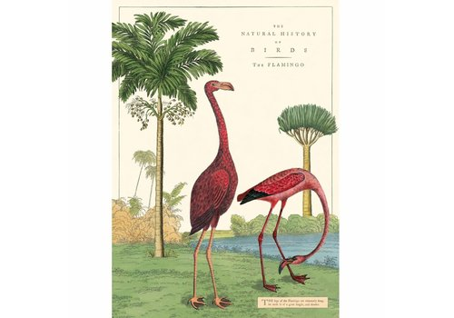 Cavallini Papers & Co Cavallini - Flamingo  - Wrap/Poster