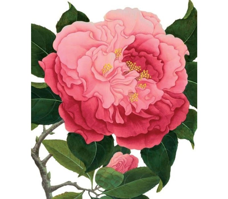 Archivist Gallery - Camelia - Greeting Card