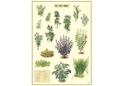 Cavallini Papers & Co Cavallini - Aux Fines Herbes - Wrap/Poster