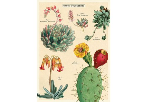 Cavallini Papers & Co Cavallini - Cacti & Succulents 2 - Wrap/Poster